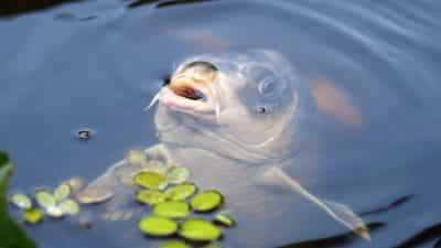 serious fishing