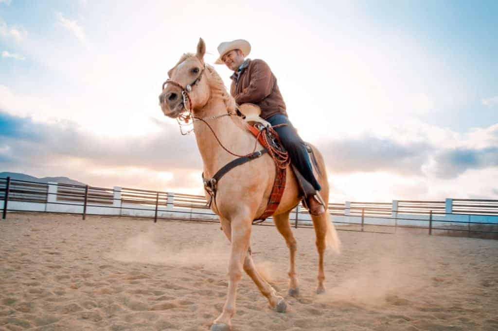 Texas Rodeo Horse